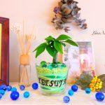 【名入れギフト】男性も喜ぶ!部屋をオシャレに飾るインテリアグリーン