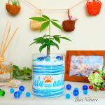 【4周年記念】海イメージの美容院へ店名&ロゴ入り観葉植物
