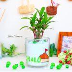 【開店祝い】店名+ロゴ入りの観葉植物でお店の看板になる贈り物