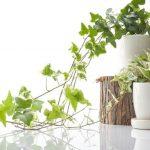 【解決法】植物を枯らすタイプだった私が、植物を枯らさなくなった方法