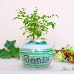 【開店祝い】尊敬する人に贈りたくなる花言葉の植物を植えて、店名入りのお祝いギフト