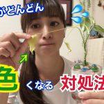 【枯らさない対処法】元花屋が伝える「なんで急に葉っぱが黄色くなっちゃうの!?」(動画あり)